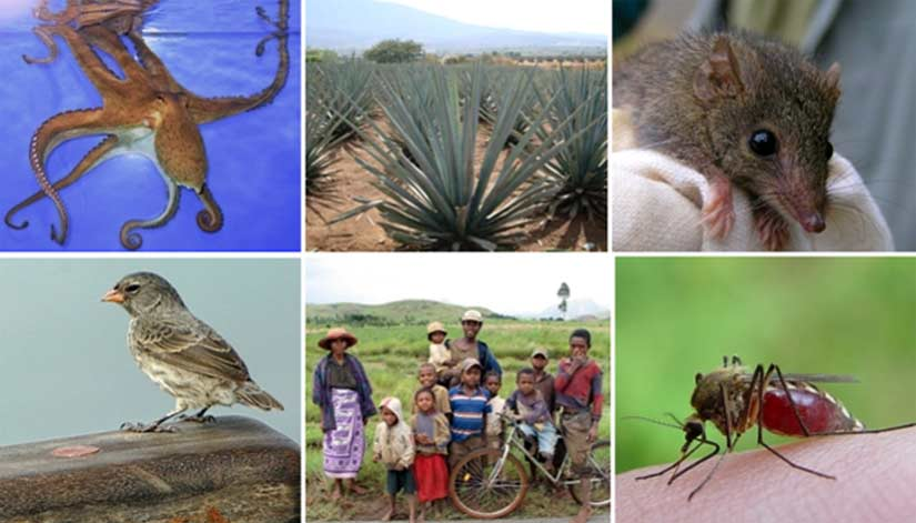 A Few Examples of Living Things, All with Awareness