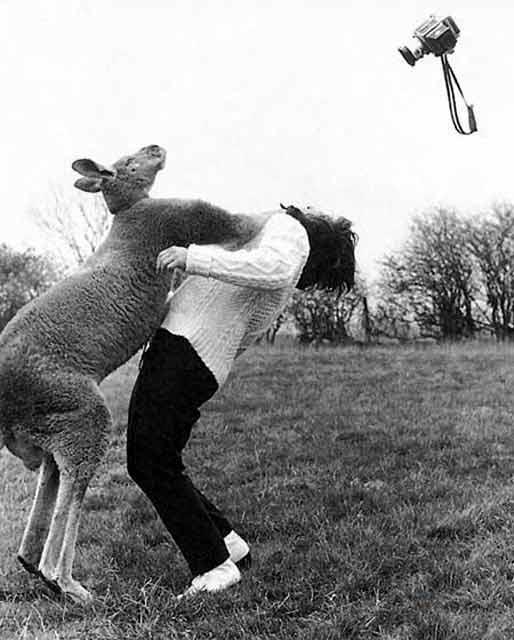 Tuesday 16th Return Angry_kangaroo