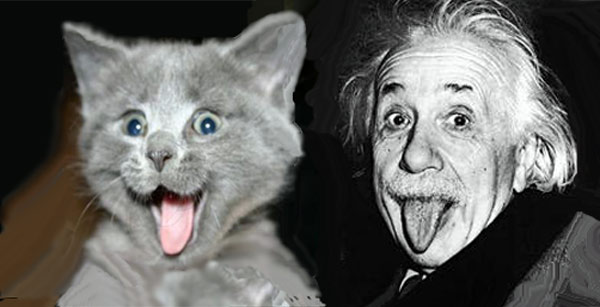 Retarded Cats And Dogs