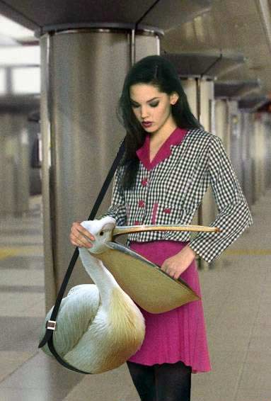 fashionable purse
